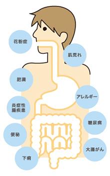 腸内の働き
